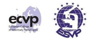 ECVP Summer School