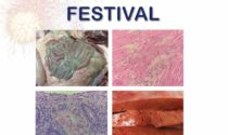 Pathology Festival – Thank You
