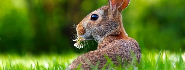 A Pot pourri of Rabbit and Hare Pathology with Interactive Cases